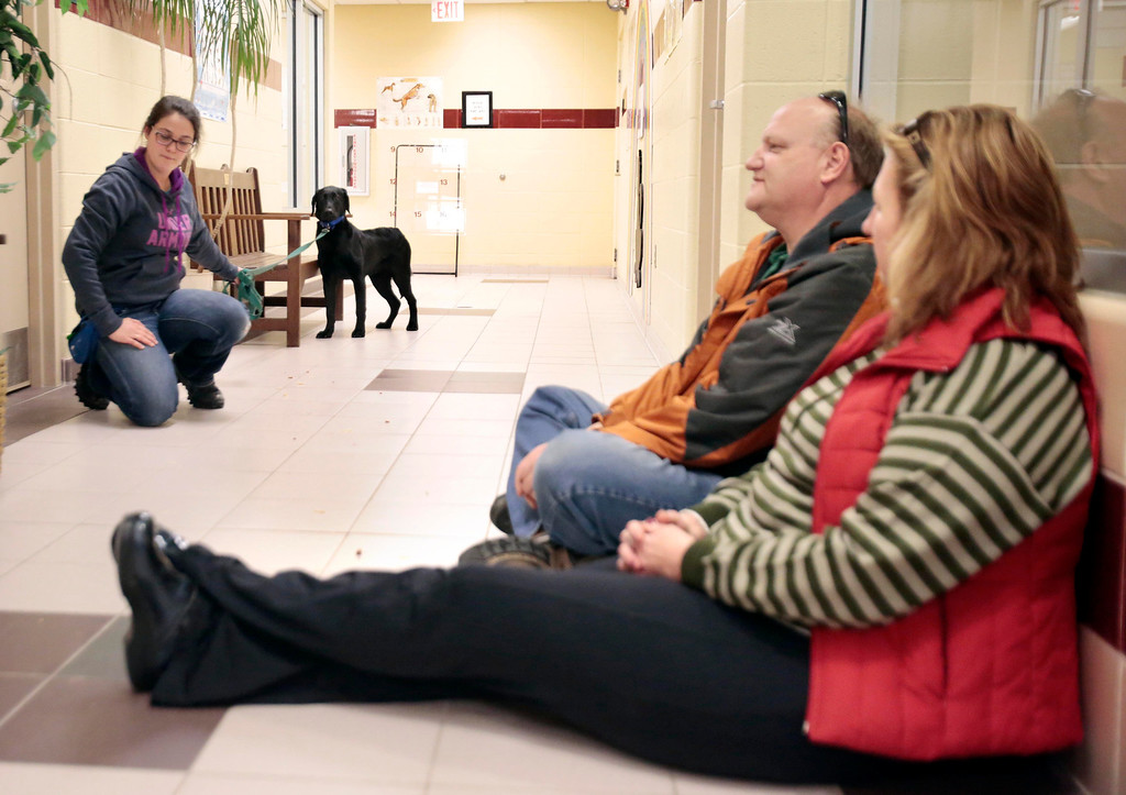 Description of . Peter Whitford and Judy Williamson, right, try to seem relaxed and non-threatening to Ross, a special needs dog who was rescued from an animal hoarder's home with 30 other dogs. Claudia Sala, left, serves as a familiar face for Ross to help him interact with new people at the Berkshire Humane Society in Pittsfield. Sunday, December 29, 2013. (Stephanie Zollshan | Berkshire Eagle Staff)