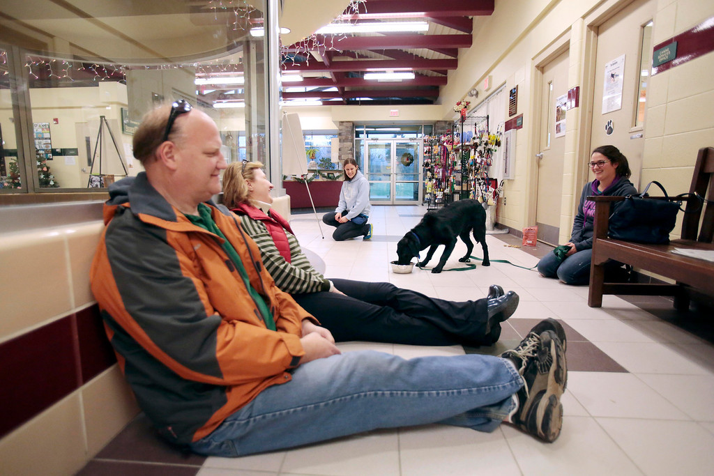 Description of . Peter Whitford and Judy Williamson, left, try to seem relaxed and non-threatening to Ross, a special needs dog who was rescued from an animal hoarder's home with 30 other dogs. Adoption councelor Laura Mertzlufft, back, and Claudia Sala serve as familiar faces for Ross as they help him interact with new people at the Berkshire Humane Society in Pittsfield. Sunday, December 29, 2013. (Stephanie Zollshan | Berkshire Eagle Staff)