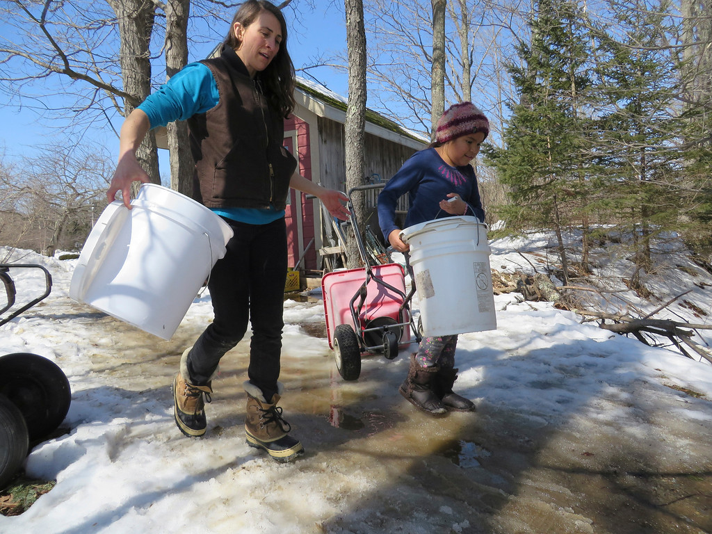 Description of . Farming and gardening teacher Hadley Milliken and third grader Maya Kuenster carry buckets to be used to collect sugar maple tree sap at the Great Barrington Rudolf Steiner School. Jenn Smith/ Berkshire Eagle Staff/ photos.berkshireeagle.com Tuesday, March 11, 2013