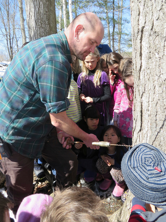Description of . Third graders watch with fascination as facilities manager Hartmuth Sommer drills by hand into a sugar maple tree to tap sap for sugaring at the Great Barrington Rudolf Steiner School. Jenn Smith/ Berkshire Eagle Staff/ photos.berkshireeagle.com Tuesday, March 11, 2013