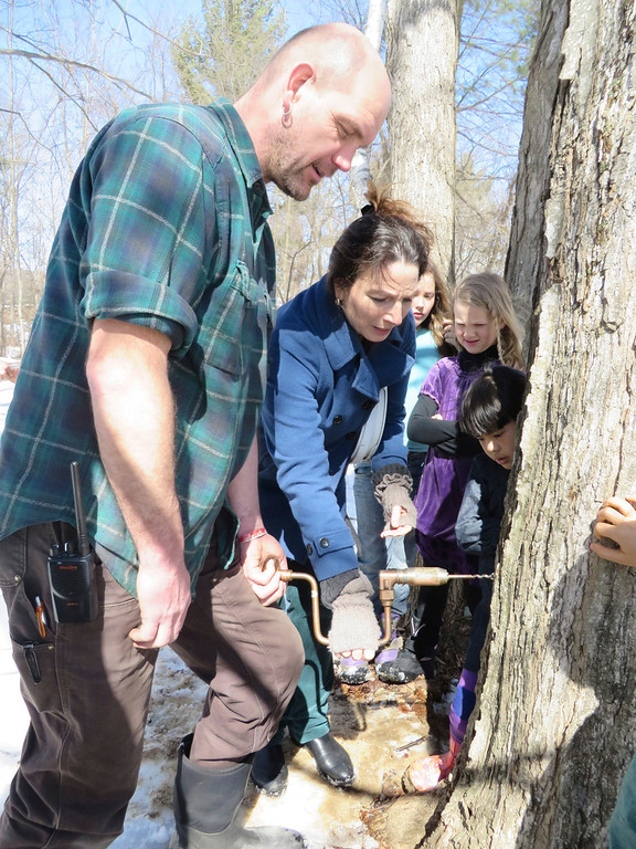 Description of . Third-grade teacher Michelle Marx tries her hand at drilling into a sugar maple tree for tapping sap with the help of facilities manager Hartmuth Sommer at Great Barrington Rudolph Steiner School. Jenn Smith/ Berkshire Eagle Staff/ photos.berkshireeagle.com Tuesday, March, 11, 2014