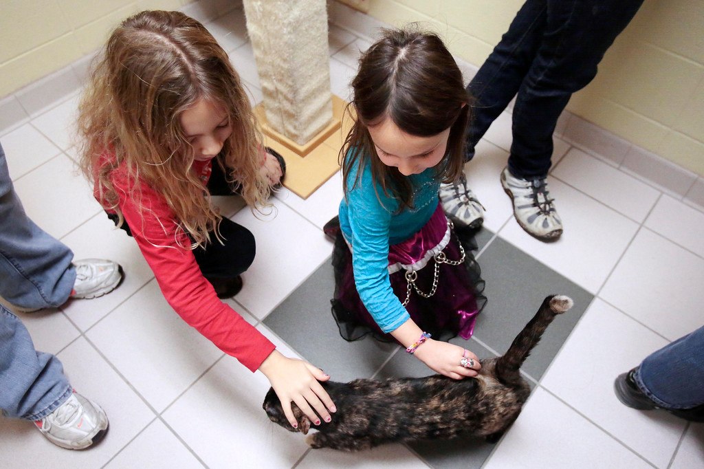 . Alex, 8, left, and Jordan Sotek, 5, play with Skittles, their new adopted cat, before they bring her home from the Berkshire Humane Society in Pittsfield. Sunday, December 29, 2013. (Stephanie Zollshan | Berkshire Eagle Staff)