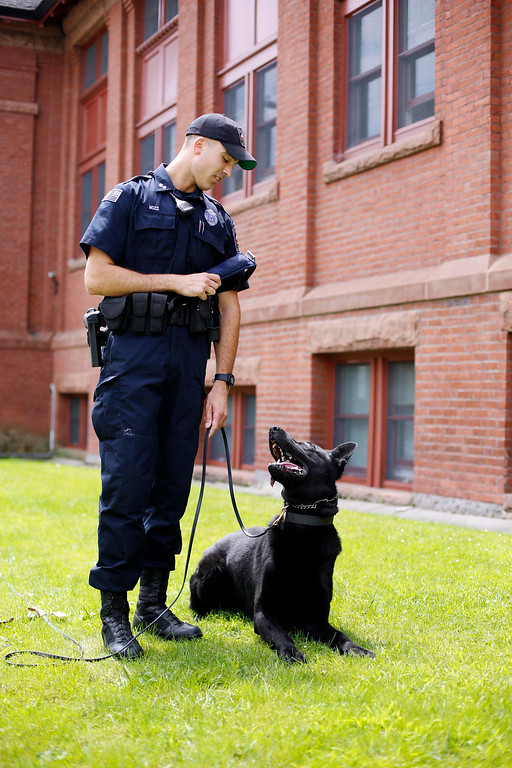 . Max, a 2-year-old German shepherd, was added to the Dalton Police Department as a K-9 unit this February under the care of Officer Matthew Mozzi. Thursday, July 31, 2014. Stephanie Zollshan / Berkshire Eagle Staff / photos.berkshireeagle.com