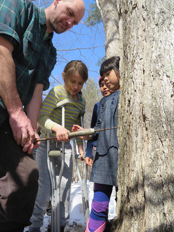 . Third graders try their hand at drilling into a sugar maple tree for tapping sap with the help of facilities manager Hartmuth Sommer at Great Barrington Rudolph Steiner School. Jenn Smith/ Berkshire Eagle Staff/ photos.berkshireeagle.com Tuesday, March, 11, 2014